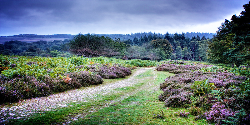 Southampton New Forest